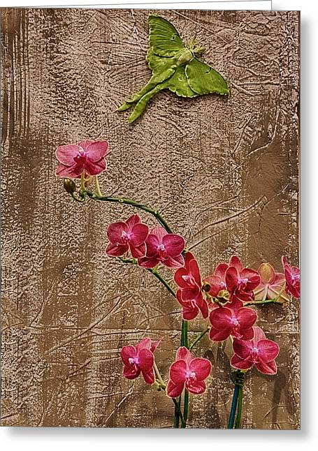 Orchids And Butterfly Greeting Card