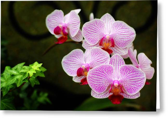 Orchids And Ivy Greeting Card