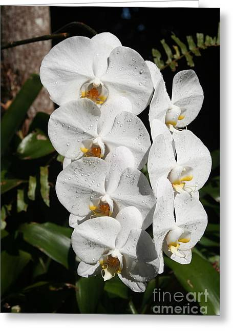 Orchids Anna Greeting Card