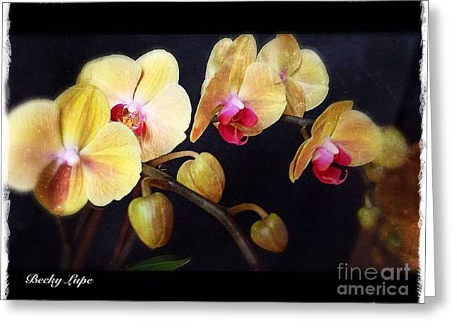 Orchids Arise Greeting Card