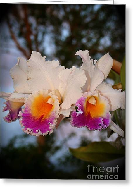 Orchid Elsie Sloan Greeting Card