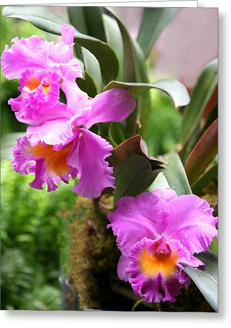 Orchids At The Washington Botanical Greeting Card by Carol Kinkead