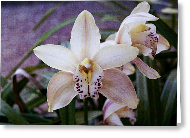 Orchids Greeting Card by Heather Provan
