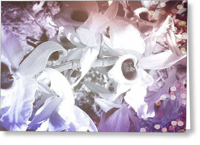 Orchids In Fantasy Colors Greeting Card