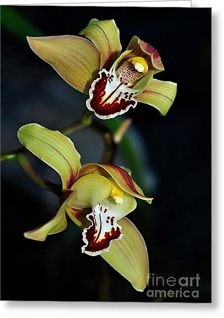Orchids Art Greeting Cards - Orchids in the Evening Greeting Card by Kaye Menner