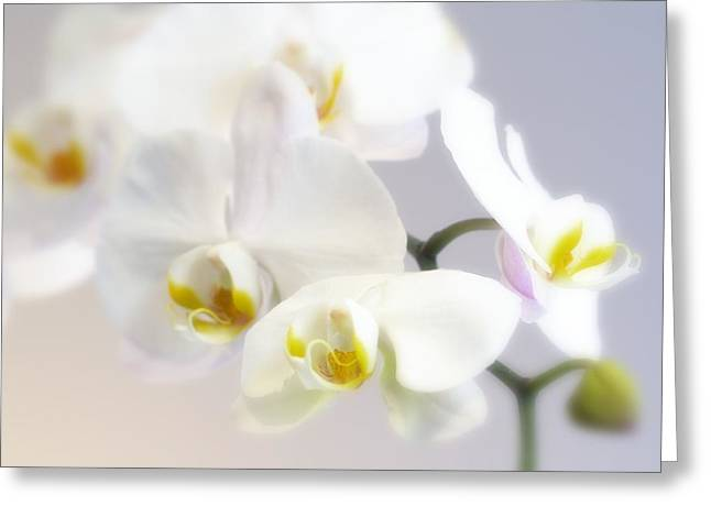 Orchids In The Mist Greeting Card