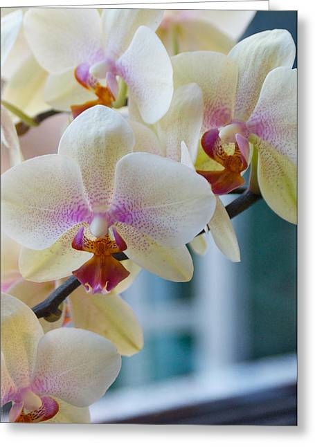 Orchids In The Morning Light Greeting Card