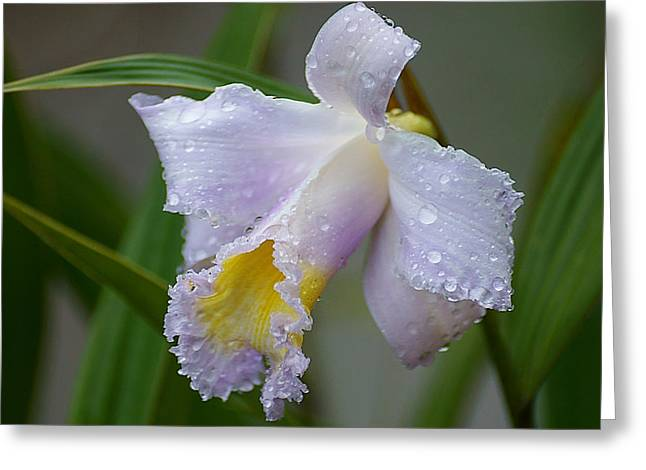 Orchids In The Wild Greeting Card