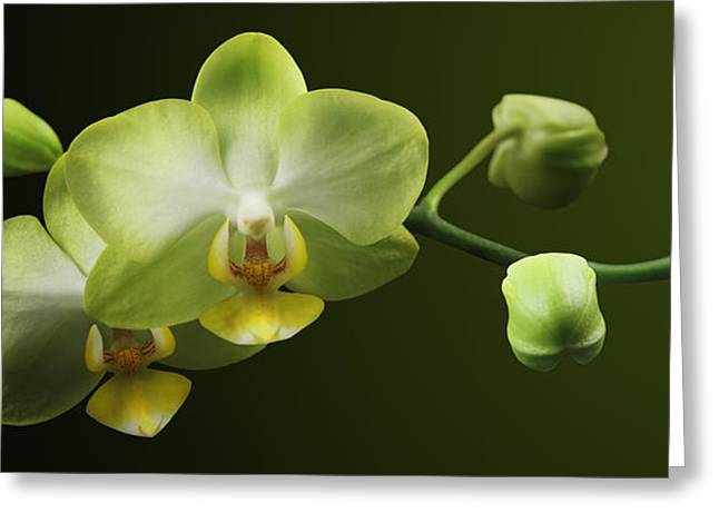 Orchids Greeting Card by Marc Huebner
