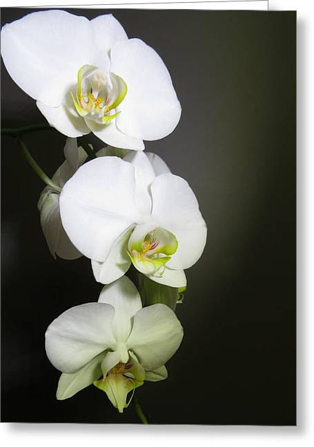 Orchids On Gray Greeting Card