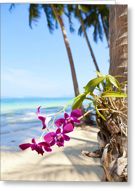 Orchids On The Beach Greeting Card