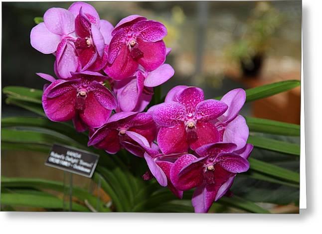 Orchids - Us Botanic Garden - 011316 Greeting Card