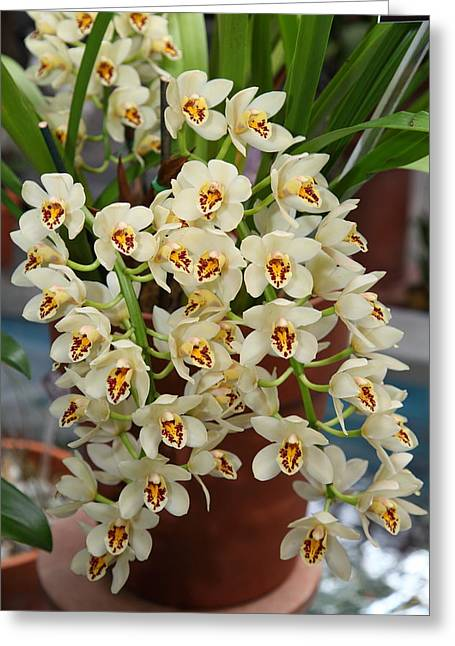Orchids - Us Botanic Garden - 011323 Greeting Card by DC Photographer