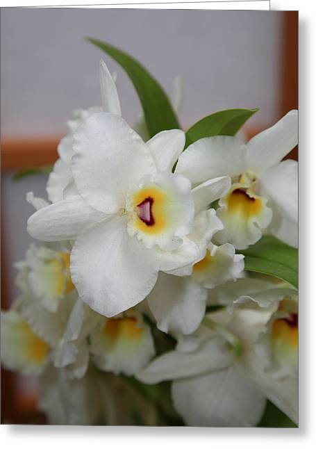 Orchids - Us Botanic Garden - 01133 Greeting Card by DC Photographer