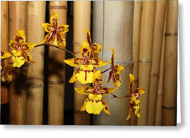 Orchids - Us Botanic Garden - 011343 Greeting Card by DC Photographer