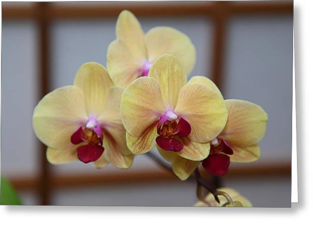 Orchids - Us Botanic Garden - 011351 Greeting Card