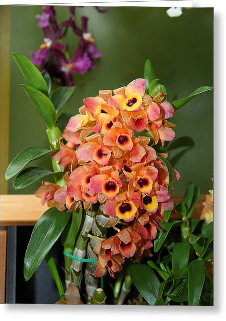 Orchids - Us Botanic Garden - 01136 Greeting Card by DC Photographer