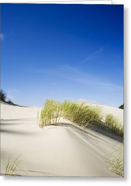 Oregon Dunes Greeting Card by Charmian Vistaunet