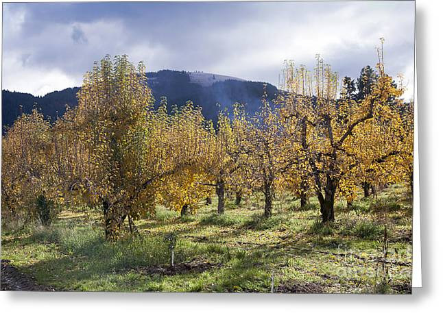 Oregon Orchard Greeting Card by Peter French