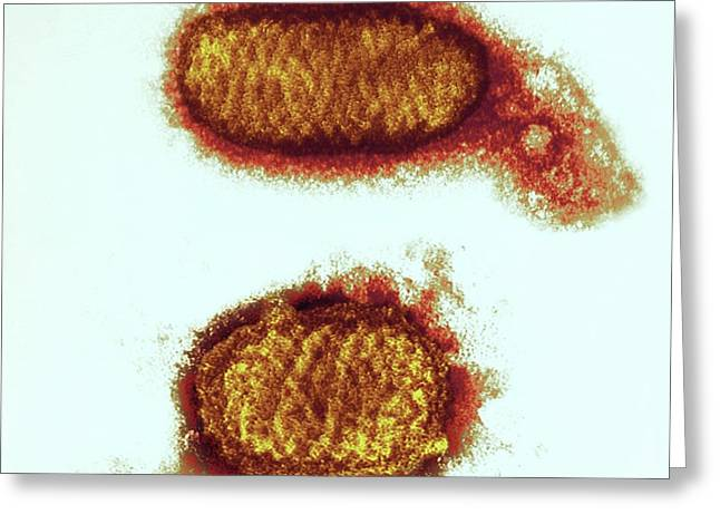 Orf Virus Particles Greeting Card by Ami Images