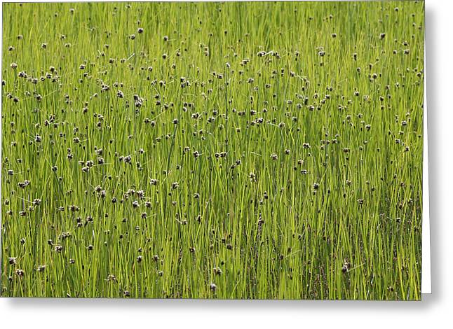 Organic Green Grass Backround Greeting Card