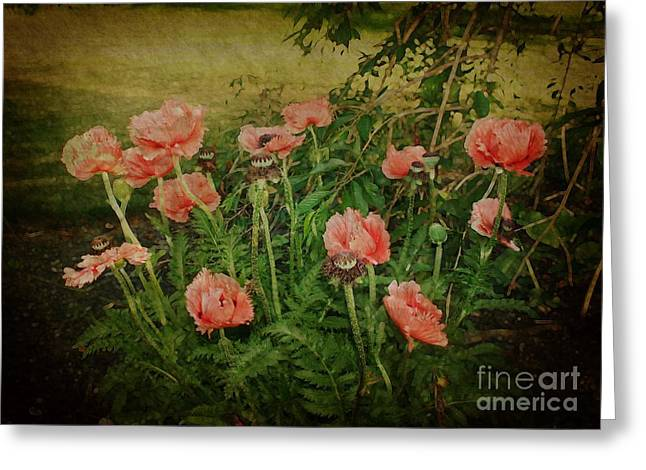 Greeting Card featuring the photograph Oriental Poppies by Rosemary Aubut