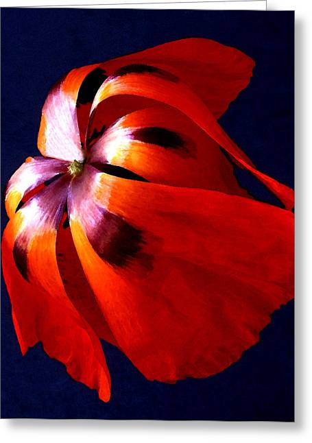 Oriental Poppy I Greeting Card