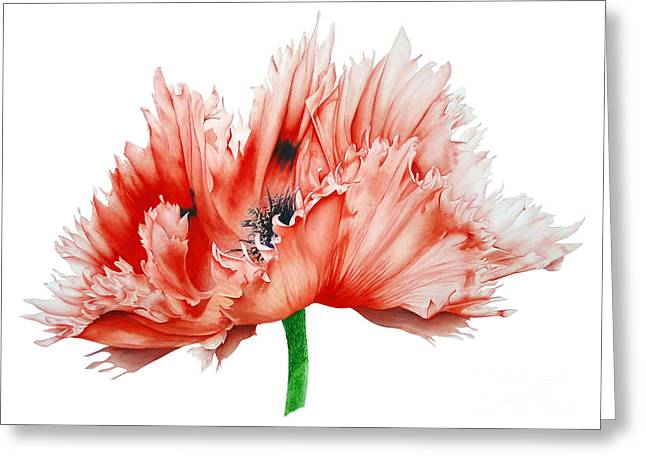 Oriental Poppy Greeting Card by Marie Burke