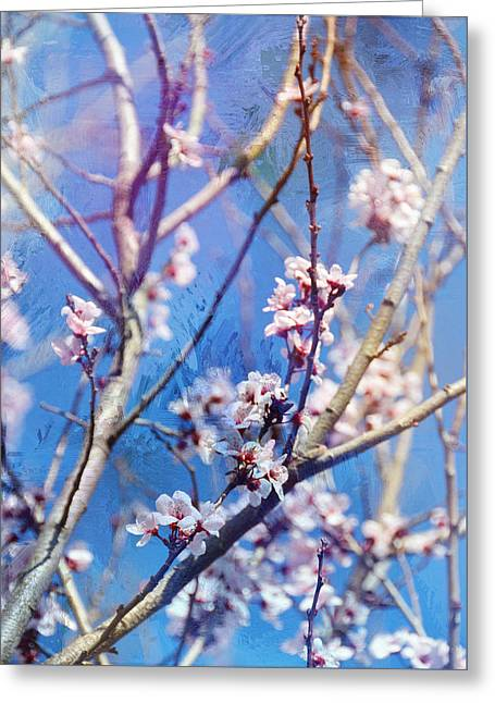 Oriental Spring Cherry Blossoms Greeting Card
