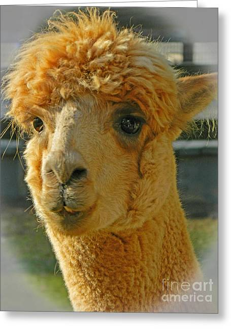 Orion The Alpaca 2 Greeting Card by Emmy Marie Vickers