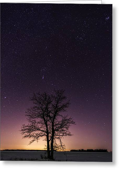 Orion Tree Greeting Card
