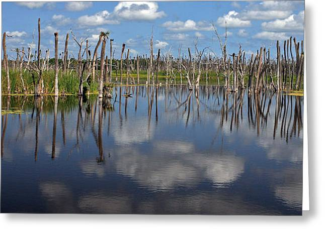 Orlando Wetlands Cloudscape 5 Greeting Card by Mike Reid