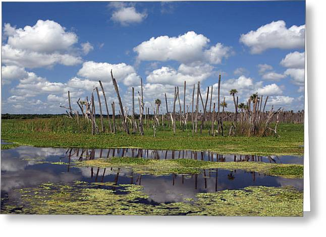 Orlando Wetlands Cloudscape Greeting Card by Mike Reid