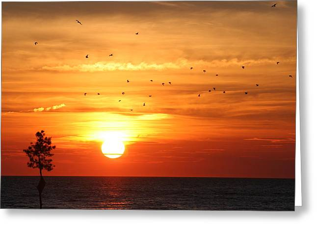 Orleans Sunset Greeting Card by Jim Gillen