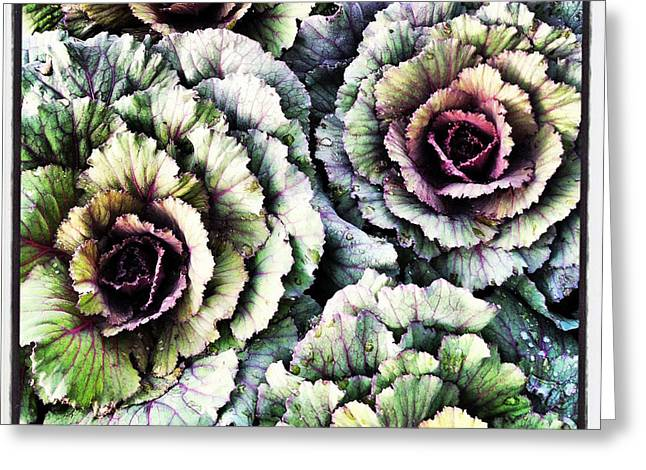 Ornamental Cabbage - I Phone Greeting Card by Brooke T Ryan