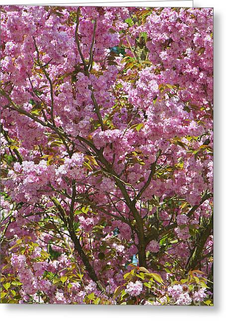 Ornamental Cherry Tree Greeting Card by Sharon Talson