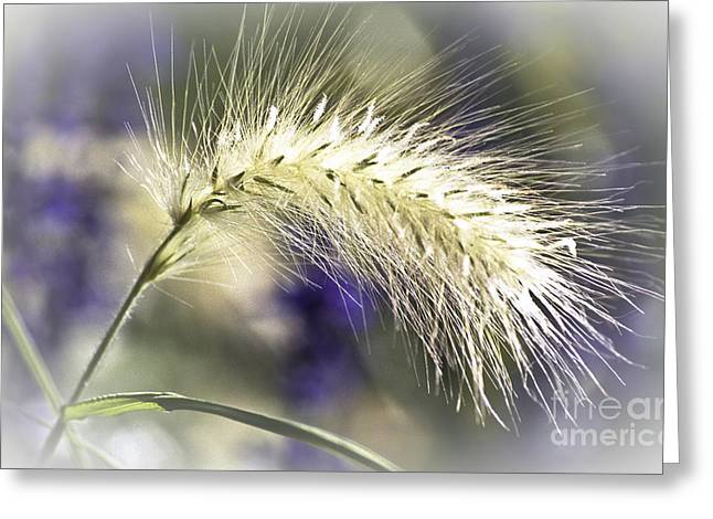 Ornamental Sweet Grass Greeting Card by Heiko Koehrer-Wagner