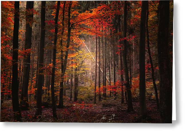 Orton Forest Greeting Card by Philippe Sainte-Laudy