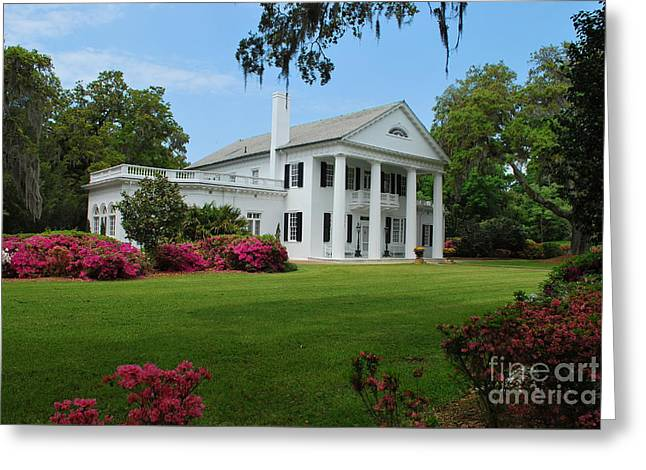 Greeting Card featuring the photograph Orton Plantation by Bob Sample
