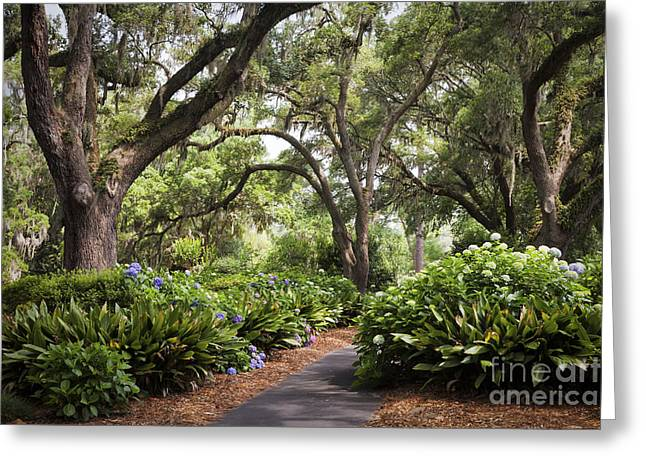 Orton Plantation Scenic Walkway Brusnwick County Nc Greeting Card
