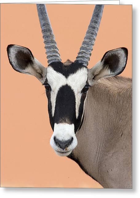 Oryx Portrait Namibia Greeting Card by Alexander Koenders