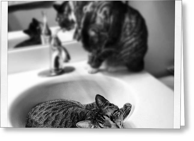 Oskar And Klaus At The Sink Greeting Card by Mick Szydlowski