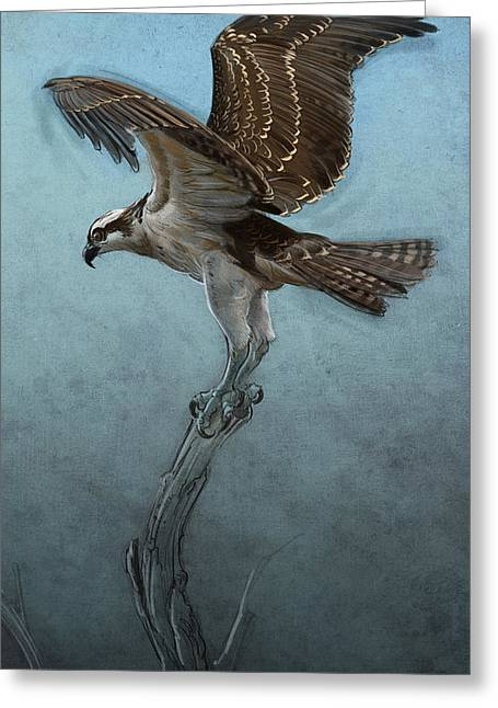 Osprey Greeting Card by Aaron Blaise