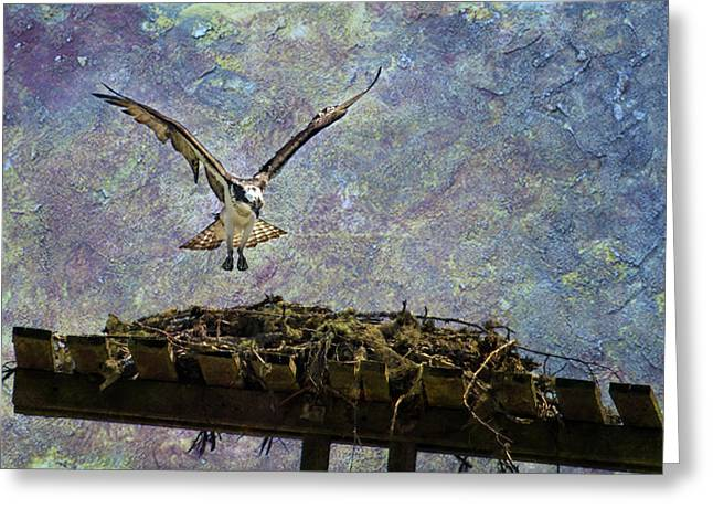 Greeting Card featuring the photograph Osprey-coming Home by Belinda Greb