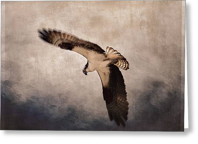 Osprey Over The Columbia River Greeting Card by Carol Leigh