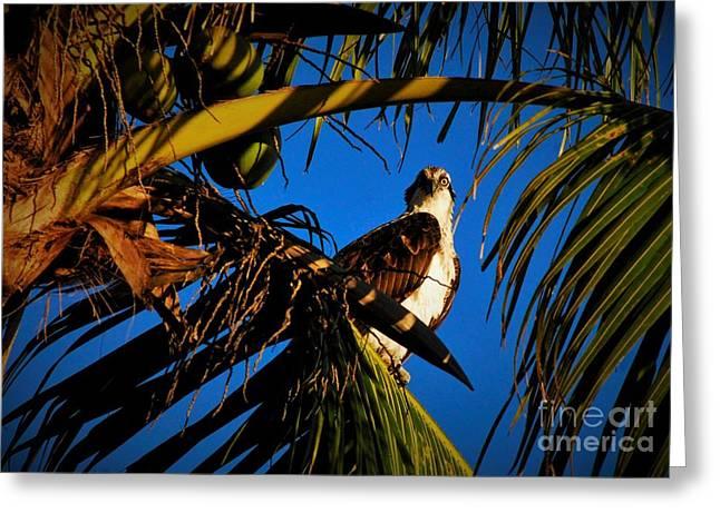 Osprey Paradise Greeting Card