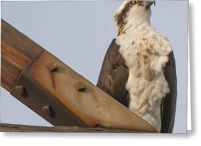 Greeting Card featuring the photograph Osprey -seahawk by Dale Powell