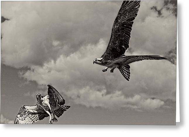 Osprey Surprise Attack D9791 Greeting Card by Wes and Dotty Weber