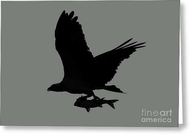 Greeting Card featuring the photograph Osprey With A Fish Photo by Meg Rousher