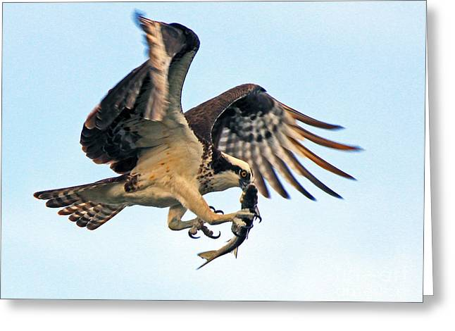 Osprey With Fish 1-6-15 Greeting Card